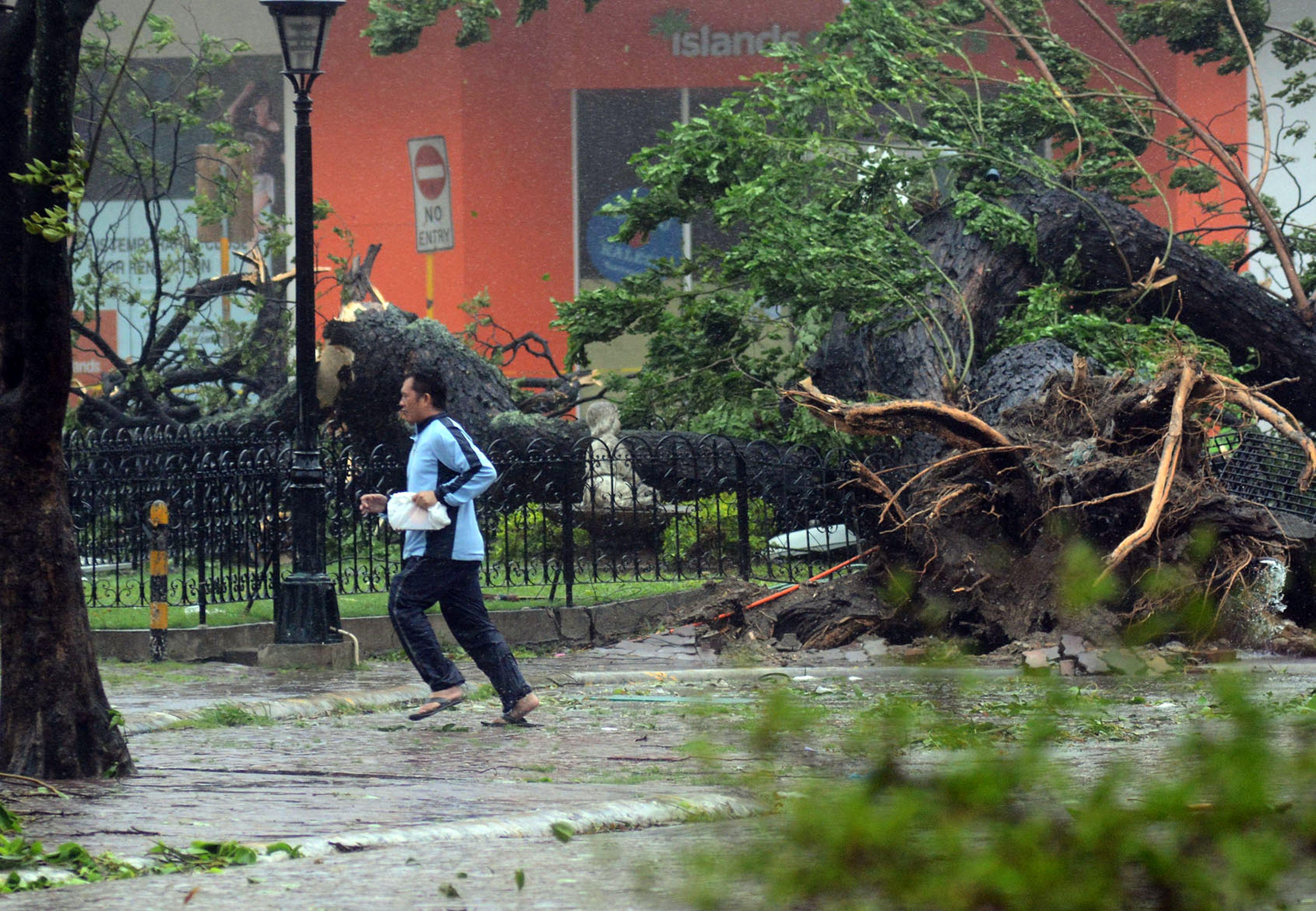 Muitas árvores caíram e provocaram vários danos