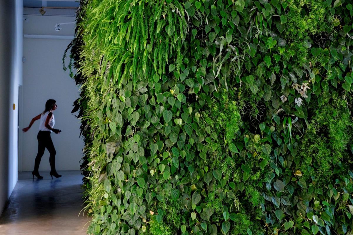 jardim vertical lisboa:Design: Quatro paredes vivas, design de clorofila – PÚBLICO